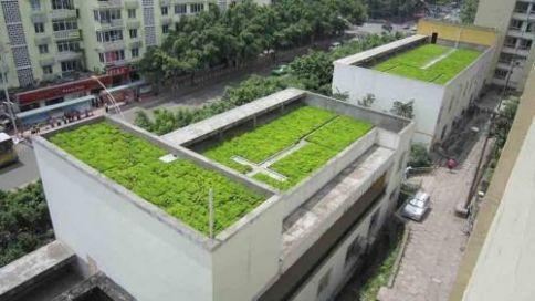 屋顶绿化排水板的现状分析
